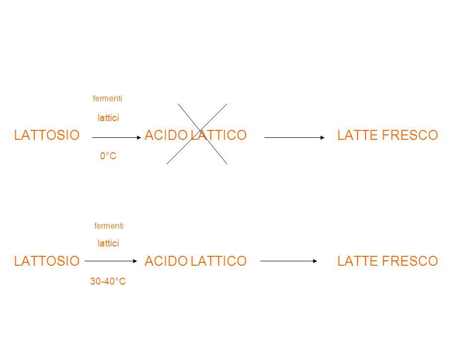 fermenti lattici LATTOSIO ACIDO LATTICO LATTE FRESCO 0°C fermenti lattici LATTOSIO ACIDO LATTICO LATTE FRESCO 30-40°C