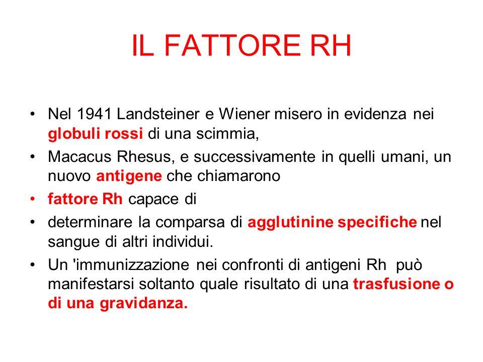 IL FATTORE RH Nel 1941 Landsteiner e Wiener misero in evidenza nei globuli rossi di una scimmia, Macacus Rhesus, e successivamente in quelli umani, un