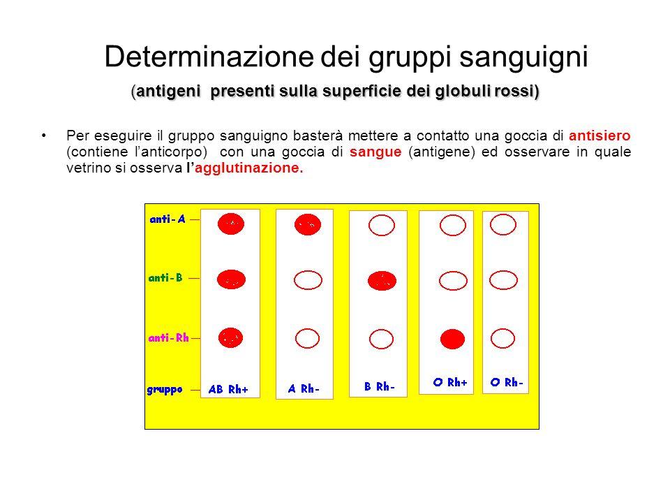 Determinazione dei gruppi sanguigni Per eseguire il gruppo sanguigno basterà mettere a contatto una goccia di antisiero (contiene lanticorpo) con una