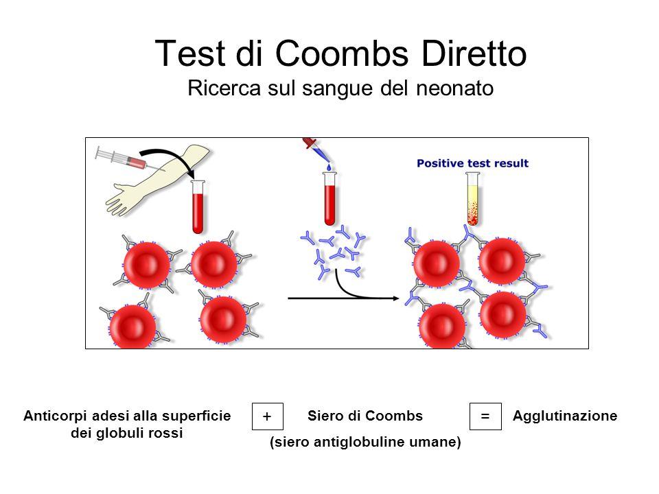 Test di Coombs Diretto Ricerca sul sangue del neonato Anticorpi adesi alla superficie dei globuli rossi + Siero di Coombs (siero antiglobuline umane)