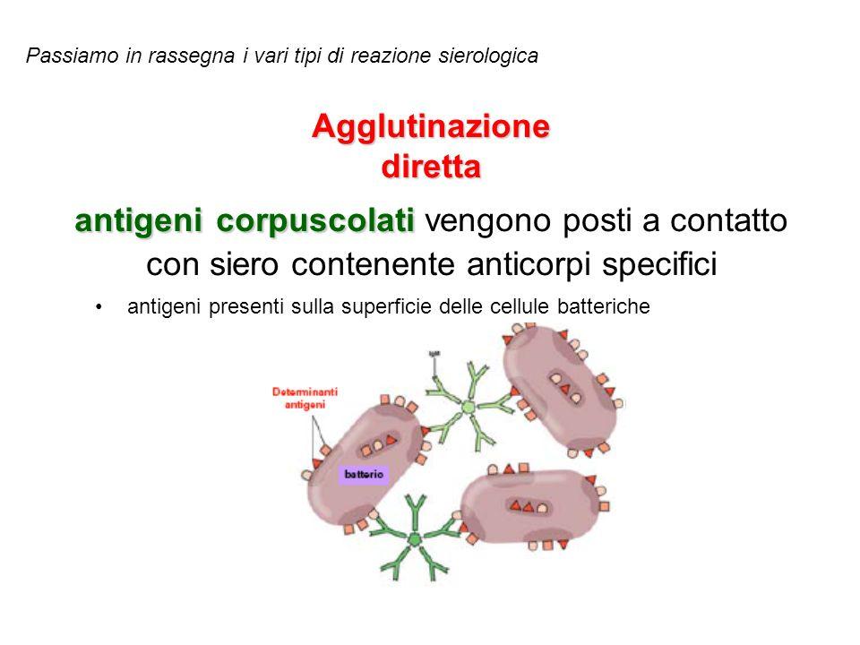 Agglutinazione indiretta Antigeni o Anticorpi vengono fatti aderire artificialmente alla superficie di particelle corpuscolate come il lattice di polistirolo.