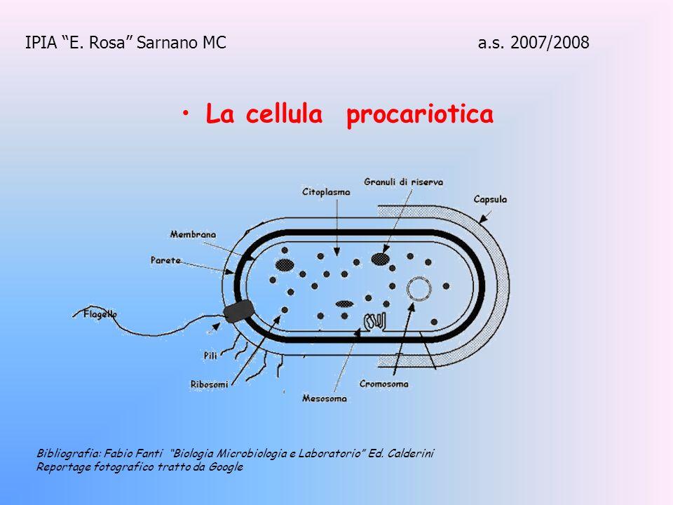 La cellula procariotica IPIA E. Rosa Sarnano MC a.s. 2007/2008 Bibliografia: Fabio Fanti Biologia Microbiologia e Laboratorio Ed. Calderini Reportage