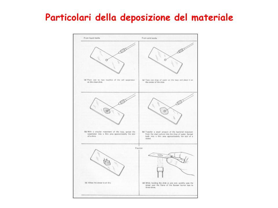 Particolari della deposizione del materiale