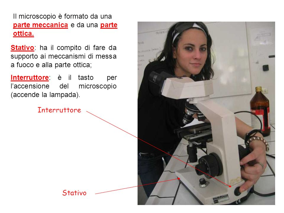 Interruttore Stativo Il microscopio è formato da una parte meccanica e da una parte ottica. Stativo: ha il compito di fare da supporto ai meccanismi d