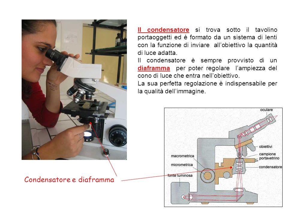 Condensatore e diaframma Il condensatore si trova sotto il tavolino portaoggetti ed è formato da un sistema di lenti con la funzione di inviare allobi