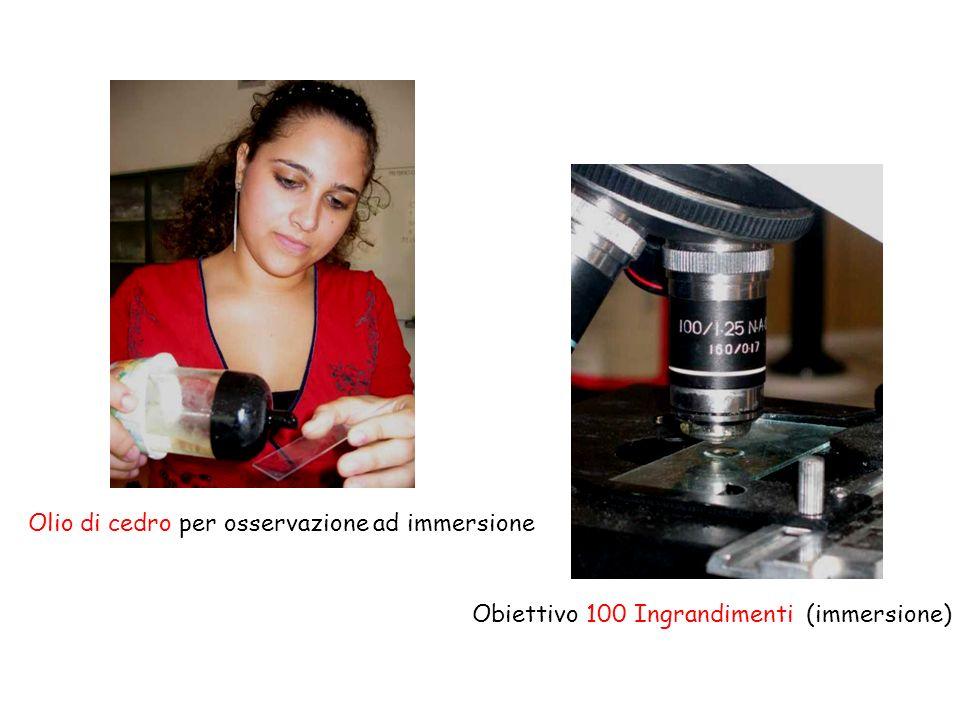 Olio di cedro per osservazione ad immersione Obiettivo 100 Ingrandimenti (immersione)