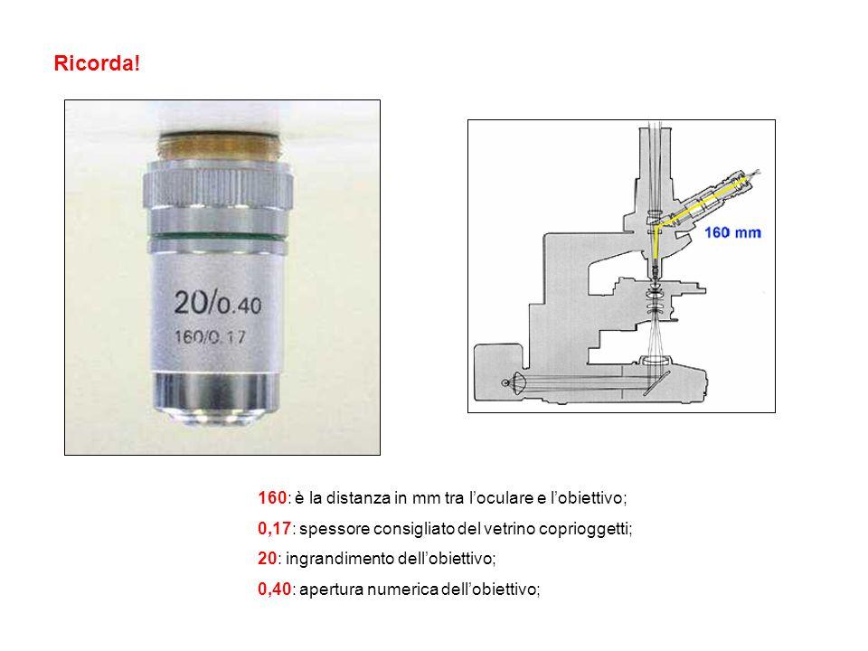 Ricorda! 160: è la distanza in mm tra loculare e lobiettivo; 0,17: spessore consigliato del vetrino coprioggetti; 20: ingrandimento dellobiettivo; 0,4