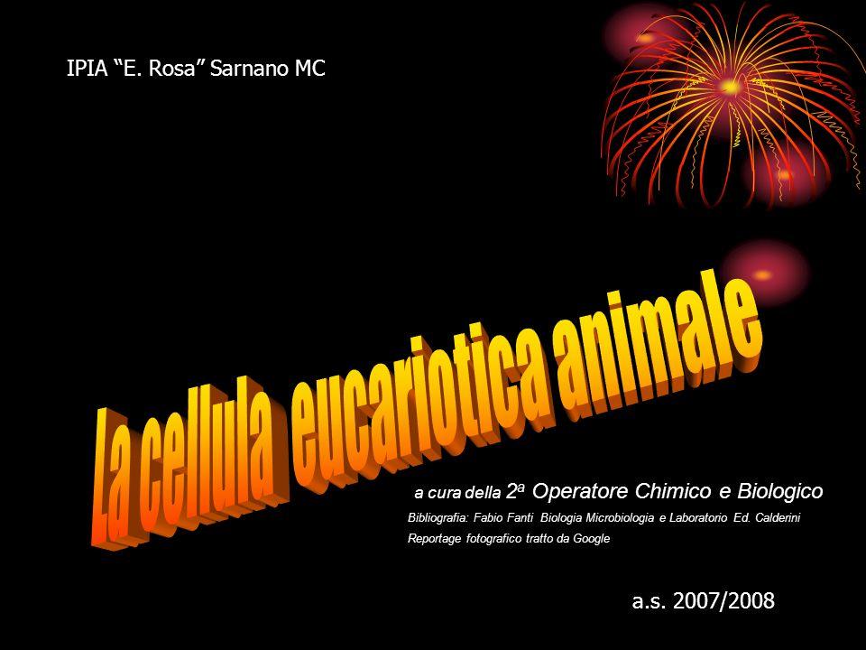 IPIA E.Rosa Sarnano MC a.s.