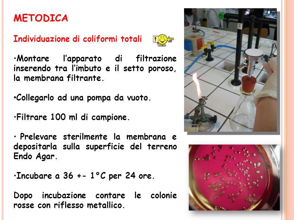 METODICA Individuazione di coliformi totali Montare lapparato di filtrazione inserendo tra limbuto e il setto poroso, la membrana filtrante. Collegarl