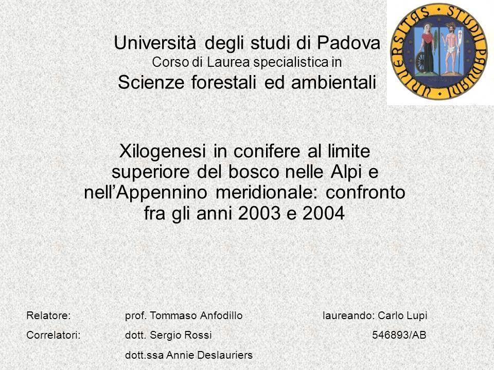 Università degli studi di Padova Corso di Laurea specialistica in Scienze forestali ed ambientali Xilogenesi in conifere al limite superiore del bosco