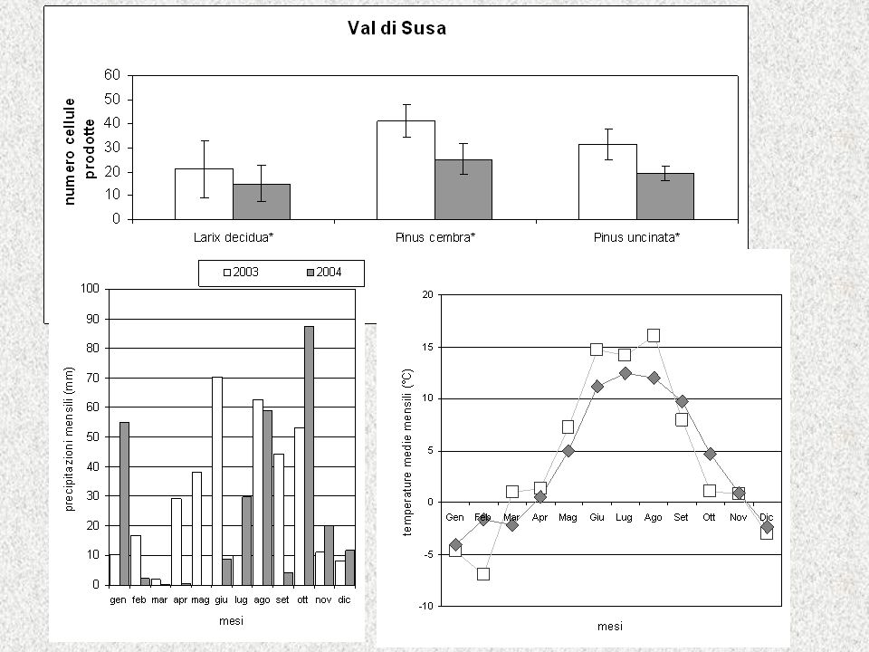 Risultati (4): Numero di cellule prodotte Più cellule nel 2003, significativo per piante VS Maggior numero di cellule prodotte nel 2003 in VS, sito xerico, dove oltre a >temperature, nel 2003 anche >precipitazioni