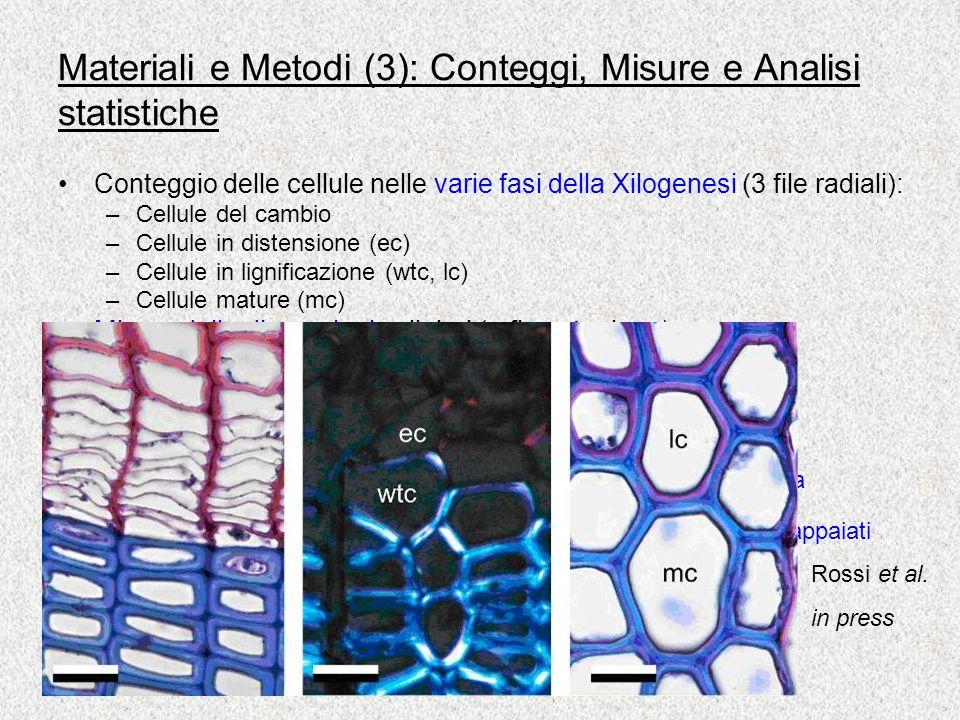 Materiali e Metodi (3): Conteggi, Misure e Analisi statistiche Conteggio delle cellule nelle varie fasi della Xilogenesi (3 file radiali): –Cellule del cambio –Cellule in distensione (ec) –Cellule in lignificazione (wtc, lc) –Cellule mature (mc) Misure delle dimensioni cellulari (a fine stagione): –ampiezza del lume –spessore delle pareti –area delle cellule Analisi statistiche: –Inizio,Fine, Durata della differenziazione: Analisi della viarianza fattoriale (effetto dellanno, del sito e di [annoXsito]) –Numero di cellule prodotte tra i due anni: t di Student per dati appaiati –Proporzione di legno tardivo tra i due anni: -quadro Rossi et al.