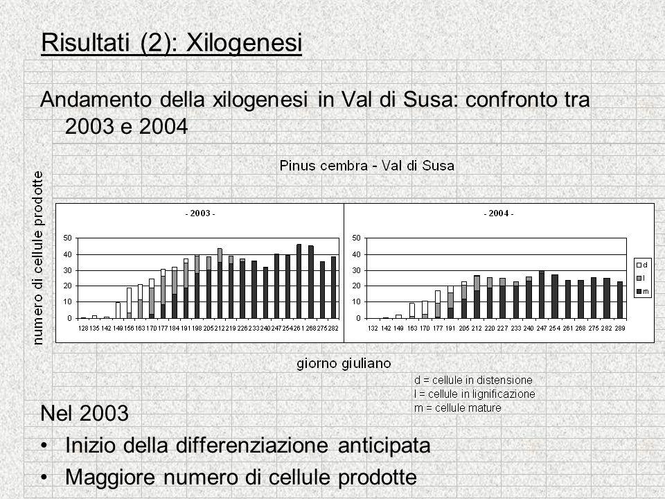 Risultati (2): Xilogenesi Andamento della xilogenesi in Val di Susa: confronto tra 2003 e 2004 Nel 2003 Inizio della differenziazione anticipata Maggi