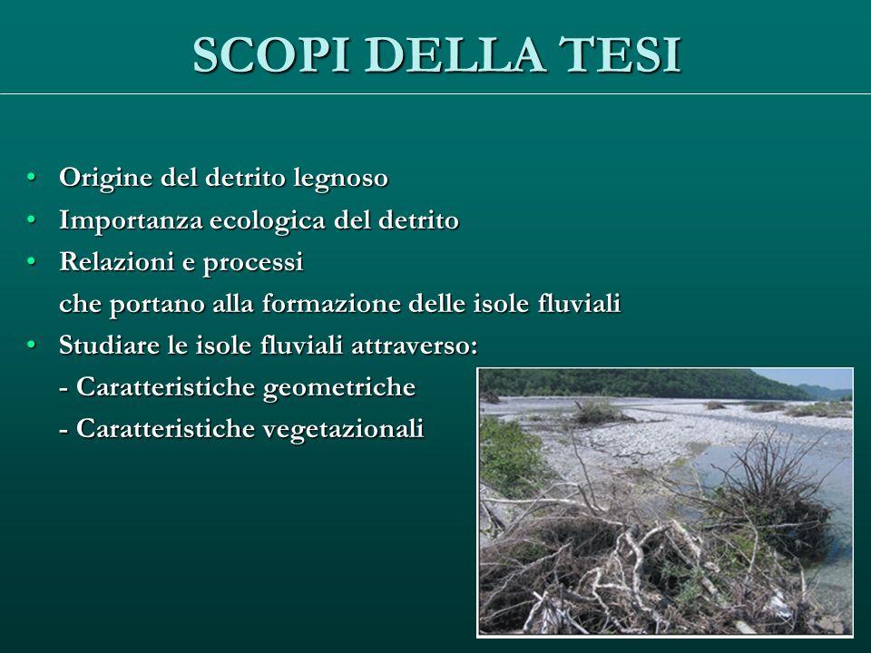SCOPI DELLA TESI Origine del detrito legnosoOrigine del detrito legnoso Importanza ecologica del detritoImportanza ecologica del detrito Relazioni e p