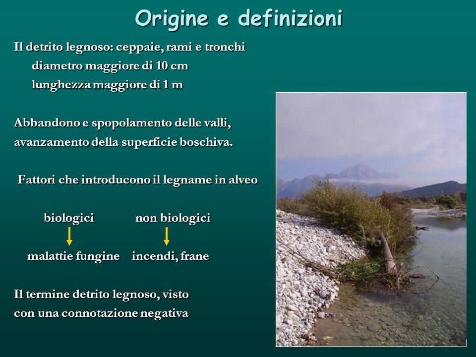 Origine e definizioni Il detrito legnoso: ceppaie, rami e tronchi diametro maggiore di 10 cm lunghezza maggiore di 1 m Abbandono e spopolamento delle