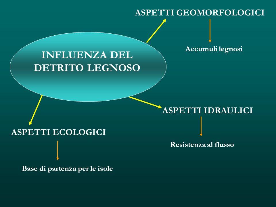 INFLUENZA DEL DETRITO LEGNOSO ASPETTI GEOMORFOLOGICI ASPETTI IDRAULICI ASPETTI ECOLOGICI Accumuli legnosi Resistenza al flusso Base di partenza per le