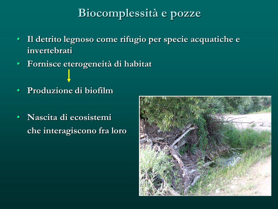 Biocomplessità e pozze Il detrito legnoso come rifugio per specie acquatiche e invertebratiIl detrito legnoso come rifugio per specie acquatiche e inv