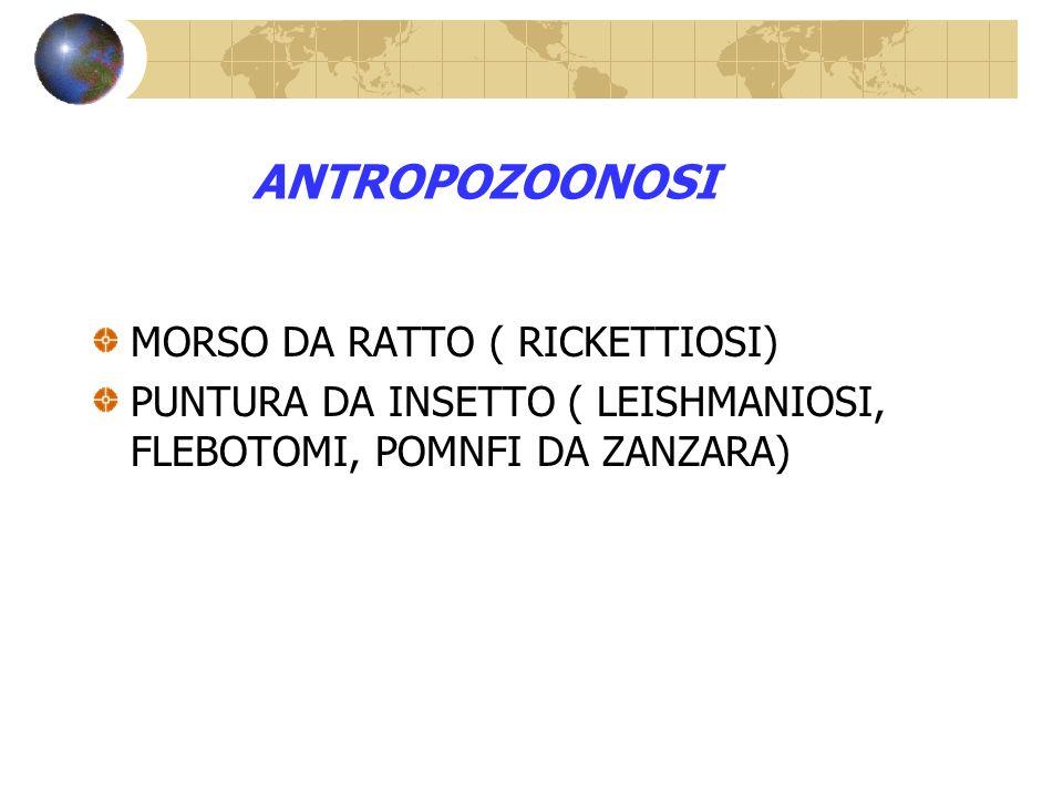 ANTROPOZOONOSI MORSO DA RATTO ( RICKETTIOSI) PUNTURA DA INSETTO ( LEISHMANIOSI, FLEBOTOMI, POMNFI DA ZANZARA)