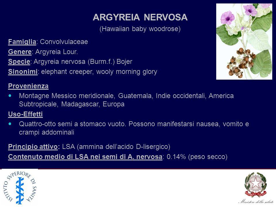 ARGYREIA NERVOSA Famiglia: Convolvulaceae Genere: Argyreia Lour. Specie: Argyreia nervosa (Burm.f.) Bojer Sinonimi: elephant creeper, wooly morning gl