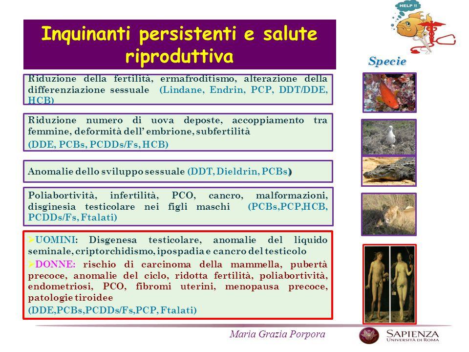 Maria Grazia Porpora UOMINI: Disgenesa testicolare, anomalie del liquido seminale, criptorchidismo, ipospadia e cancro del testicolo DONNE: rischio di carcinoma della mammella, pubertà precoce, anomalie del ciclo, ridotta fertilità, poliabortività, endometriosi, PCO, fibromi uterini, menopausa precoce, patologie tiroidee (DDE,PCBs,PCDDs/Fs,PCP, Ftalati) ) Anomalie dello sviluppo sessuale (DDT, Dieldrin, PCBs) Riduzione numero di uova deposte, accoppiamento tra femmine, deformità dell embrione, subfertilità (DDE, PCBs, PCDDs/Fs, HCB) Riduzione della fertilità, ermafroditismo, alterazione della differenziazione sessuale (Lindane, Endrin, PCP, DDT/DDE, HCB) Specie Poliabortività, infertilità, PCO, cancro, malformazioni, disginesia testicolare nei figli maschi (PCBs,PCP,HCB, PCDDs/Fs, Ftalati) Inquinanti persistenti e salute riproduttiva