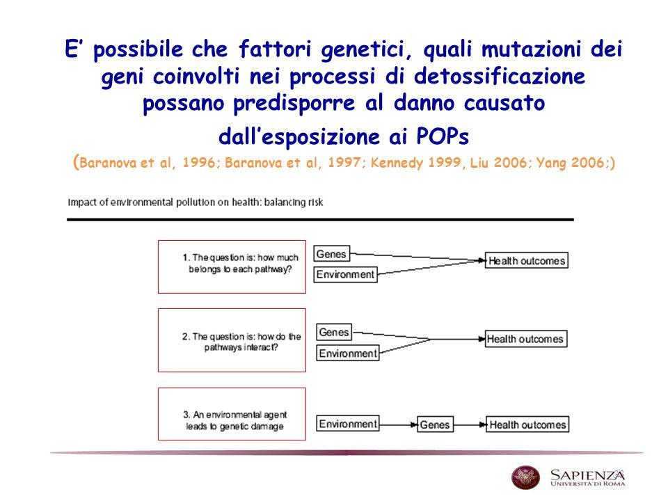 33 E possibile che fattori genetici, quali mutazioni dei geni coinvolti nei processi di detossificazione possano predisporre al danno causato dallesposizione ai POPs ( Baranova et al, 1996; Baranova et al, 1997; Kennedy 1999, Liu 2006; Yang 2006;)