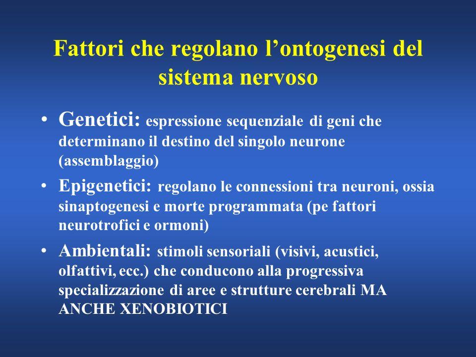 Fattori che regolano lontogenesi del sistema nervoso Genetici: espressione sequenziale di geni che determinano il destino del singolo neurone (assembl