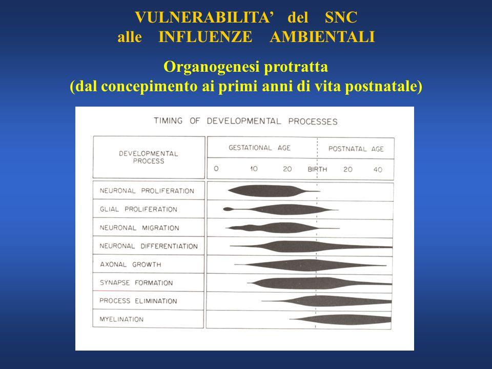 VULNERABILITA del SNC alle INFLUENZE AMBIENTALI Organogenesi protratta (dal concepimento ai primi anni di vita postnatale)