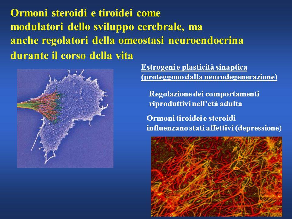 Ormoni steroidi e tiroidei come modulatori dello sviluppo cerebrale, ma anche regolatori della omeostasi neuroendocrina durante il corso della vita Es