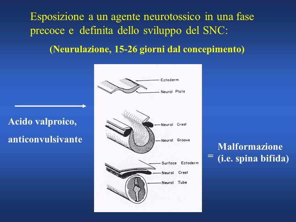 Esposizione a un agente neurotossico in una fase precoce e definita dello sviluppo del SNC: (Neurulazione, 15-26 giorni dal concepimento) Malformazion