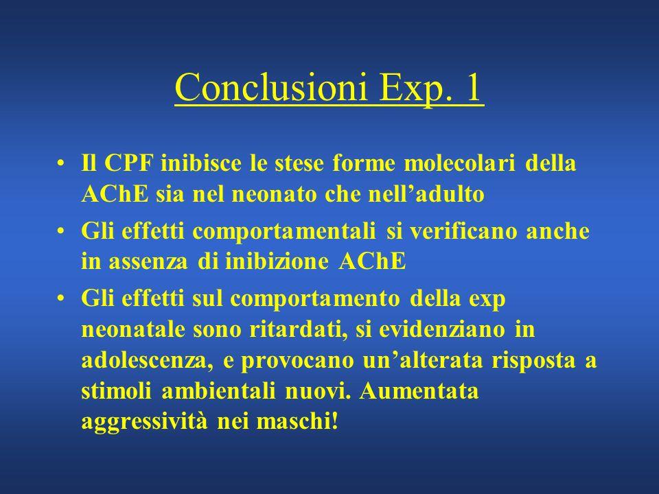 Conclusioni Exp. 1 Il CPF inibisce le stese forme molecolari della AChE sia nel neonato che nelladulto Gli effetti comportamentali si verificano anche
