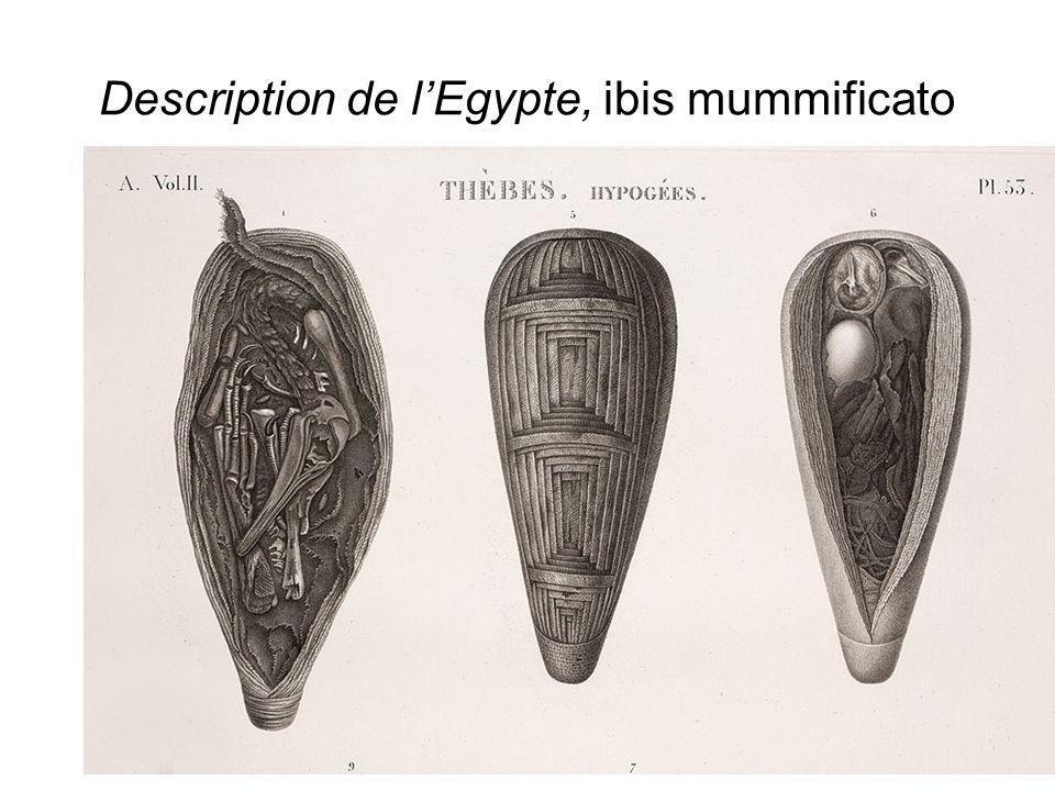 La decifrazione della scrittura geroglifica