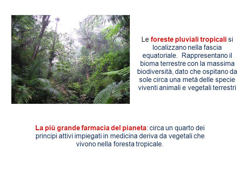 Le foreste pluviali tropicali si localizzano nella fascia equatoriale. Rappresentano il bioma terrestre con la massima biodiversità, dato che ospitano
