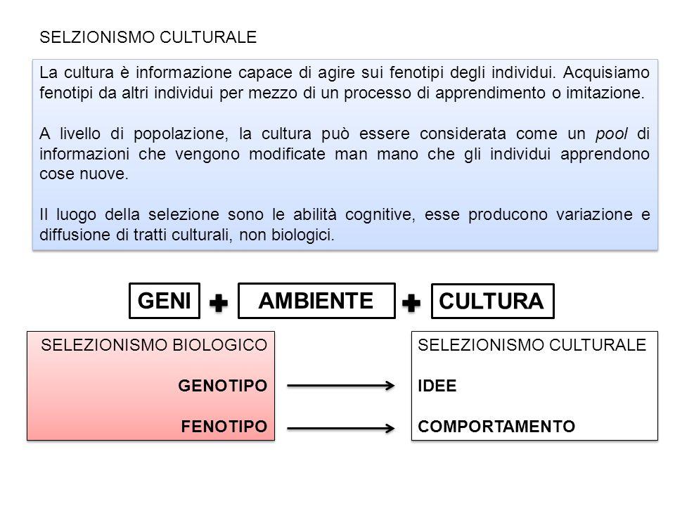 SELZIONISMO CULTURALE La cultura è informazione capace di agire sui fenotipi degli individui.