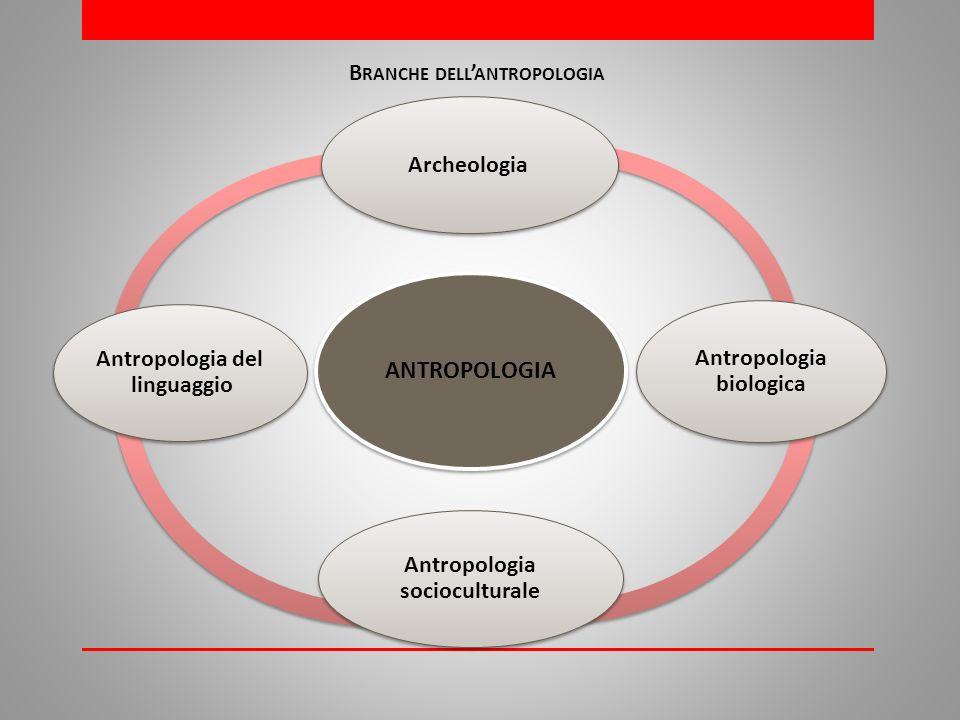 ANTROPOLOGIA Archeologia Antropologia biologica Antropologia socioculturale Antropologia del linguaggio B RANCHE DELL ANTROPOLOGIA