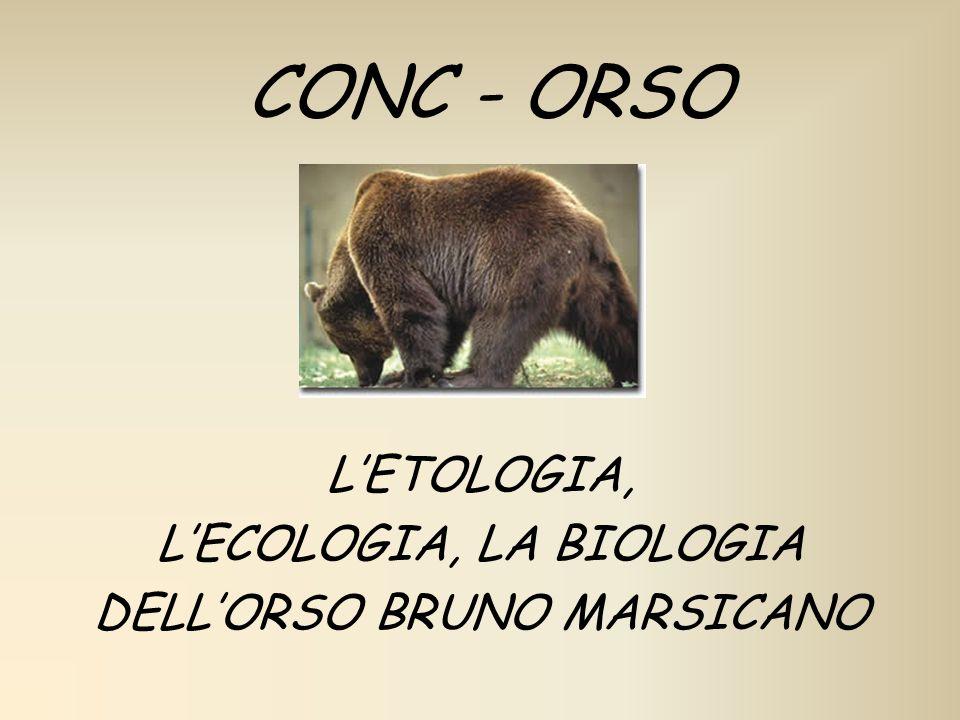 CONC - ORSO LETOLOGIA, LECOLOGIA, LA BIOLOGIA DELLORSO BRUNO MARSICANO