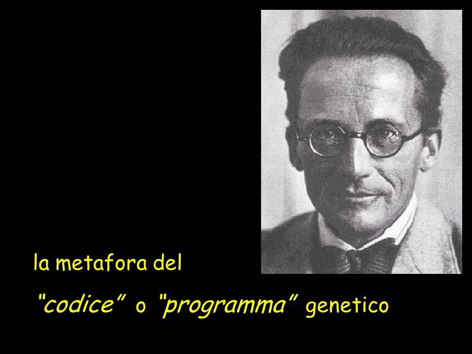 la metafora del codice o programma genetico