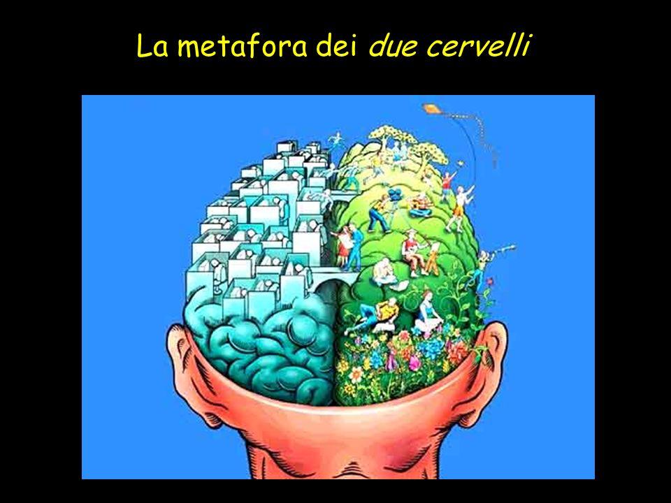 La metafora dei due cervelli