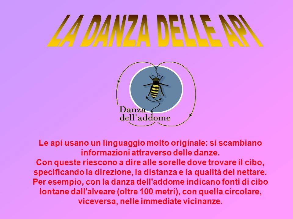 Le api usano un linguaggio molto originale: si scambiano informazioni attraverso delle danze.