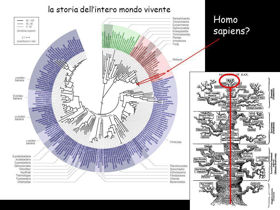 Homo sapiens? la storia dellintero mondo vivente