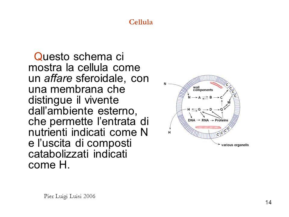 14 Cellula Questo schema ci mostra la cellula come un affare sferoidale, con una membrana che distingue il vivente dallambiente esterno, che permette lentrata di nutrienti indicati come N e luscita di composti catabolizzati indicati come H.