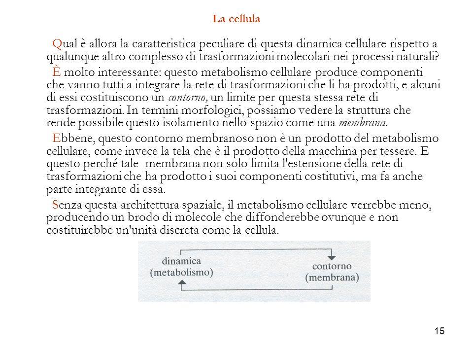 15 La cellula Qual è allora la caratteristica peculiare di questa dinamica cellulare rispetto a qualunque altro complesso di trasformazioni molecolari nei processi naturali.