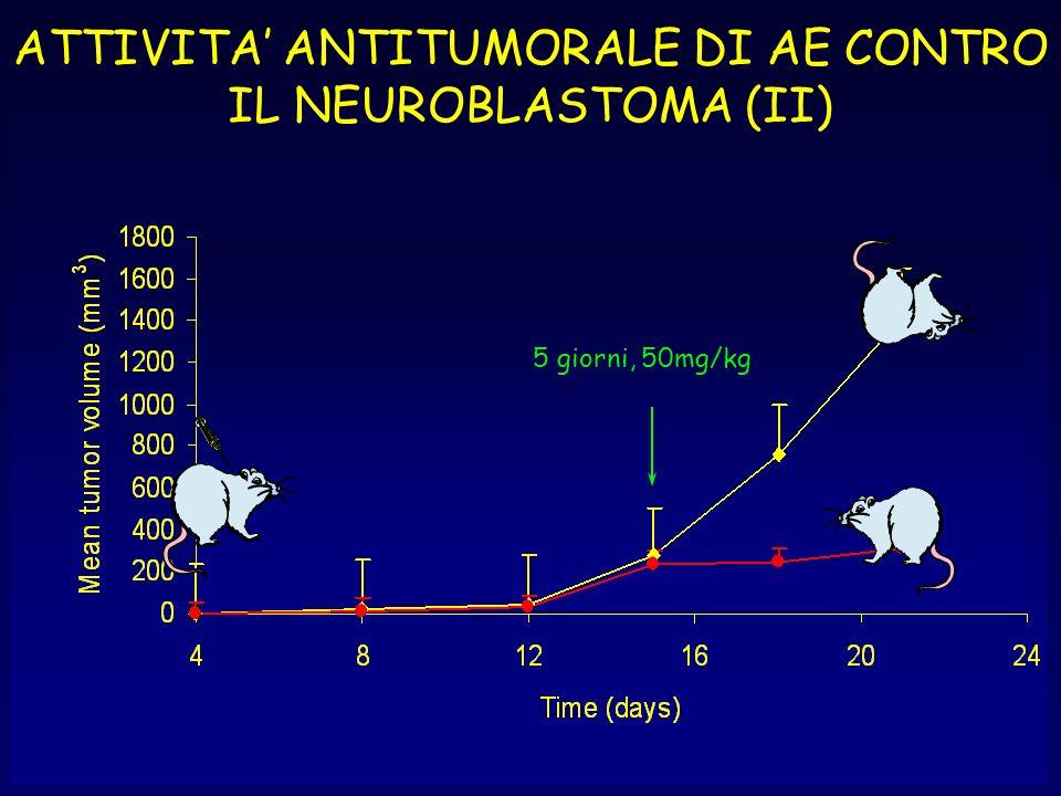 5 giorni, 50mg/kg ATTIVITA ANTITUMORALE DI AE CONTRO IL NEUROBLASTOMA (II)