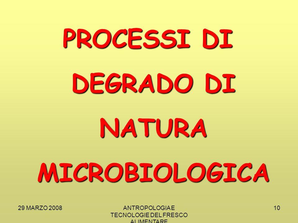29 MARZO 2008ANTROPOLOGIA E TECNOLOGIE DEL FRESCO ALIMENTARE 10 PROCESSI DI DEGRADO DI NATURA MICROBIOLOGICA