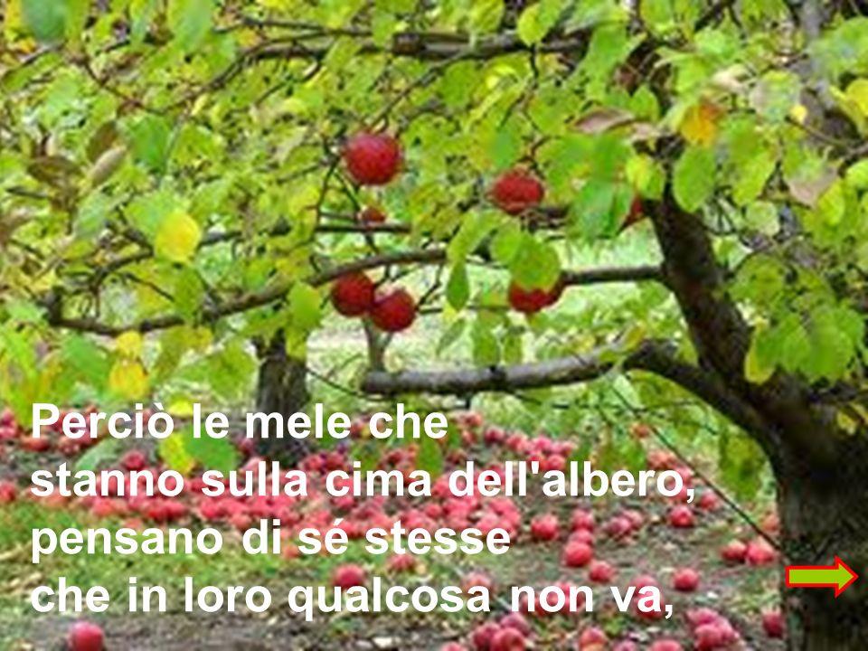 Perciò le mele che stanno sulla cima dell albero, pensano di sé stesse che in loro qualcosa non va,