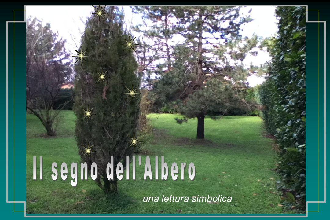 Lalbero interagisce sempre con lambiente: con la sua presenza o con la sua assenza modifica il clima dellambiente in cui vive.