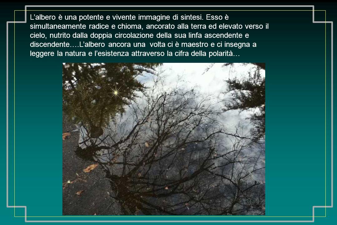 Lalbero è una potente e vivente immagine di sintesi.