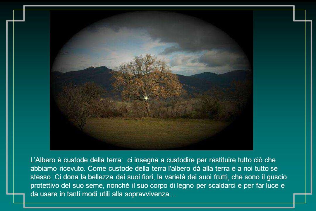 LAlbero è custode della terra: ci insegna a custodire per restituire tutto ciò che abbiamo ricevuto.