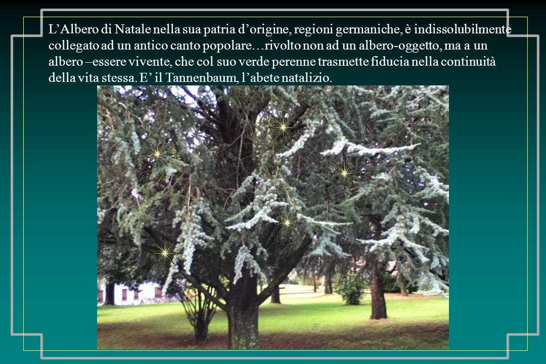 Lalbero attraverso il suo spogliamento ciclico insegna ad accettare un importante processo di purificazione e spogliazione che interessa anche lessere umano nelle varie stagioni della vita.