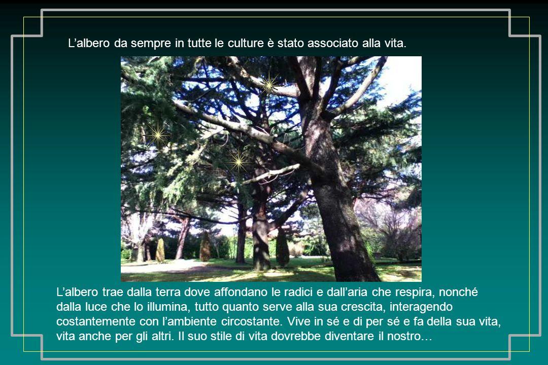 Per guardare un albero siamo costretti a guardare verso lalto, dove la sua chioma si apre alla luce e dialoga col vento.