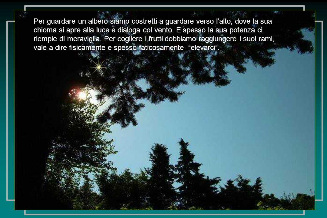 Pensieri elaborati dal libro: Il canto degli alberi di Anna Maria Finotti, Ed.